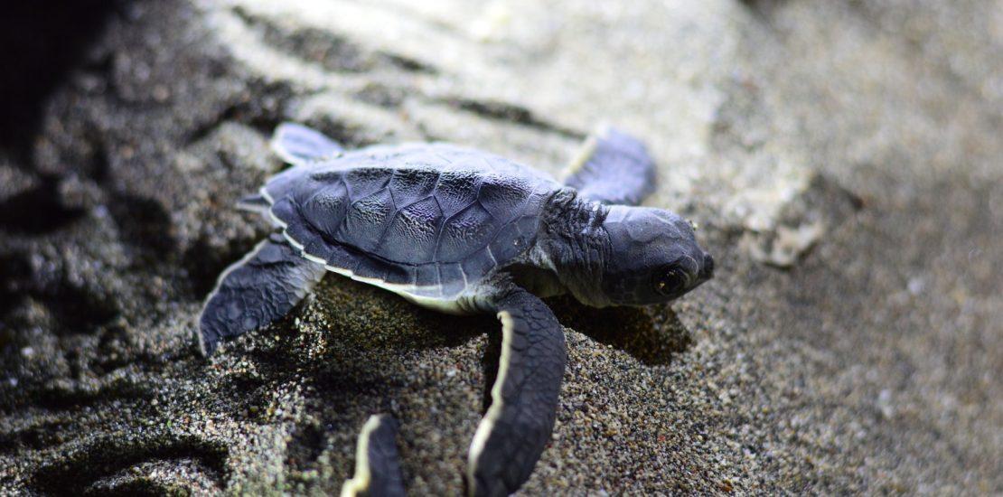 29 EVS Stories De sezon cu baby turtles (1)