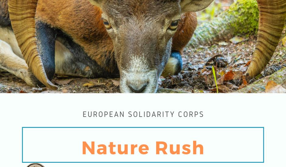 Nature Rush